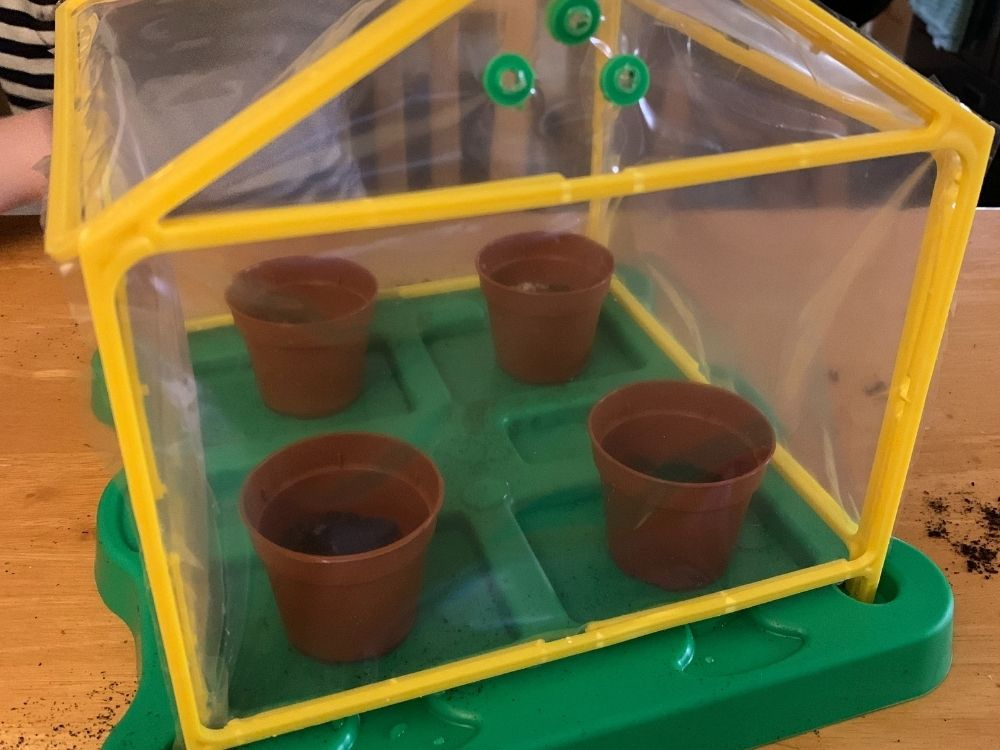 Greenhouse with plant pots in