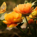 Yellow flowers and yellow butterfly
